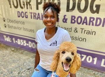 Your Pro Dog Trainer